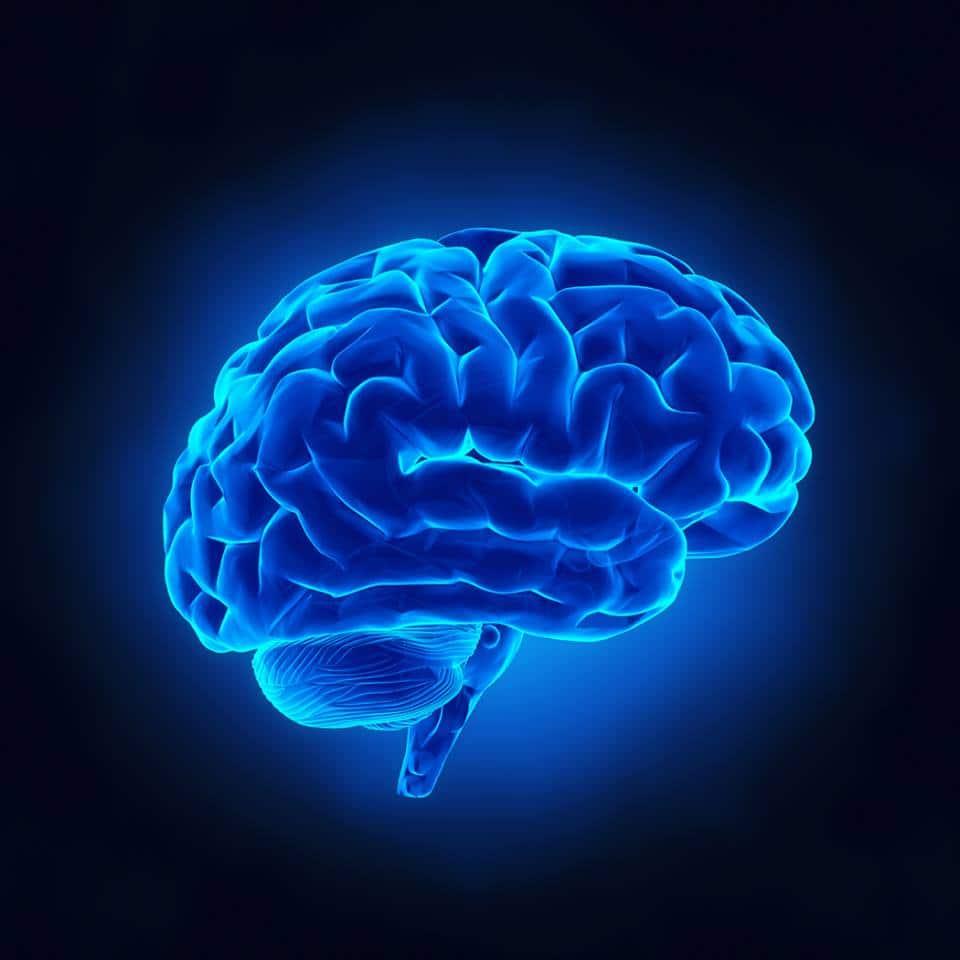 心理學-哲學-自然科學