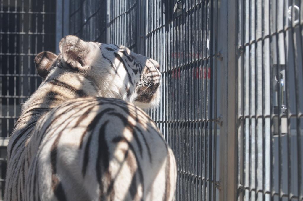 動物權益:馬戲團或許是「最不必要之惡」 4