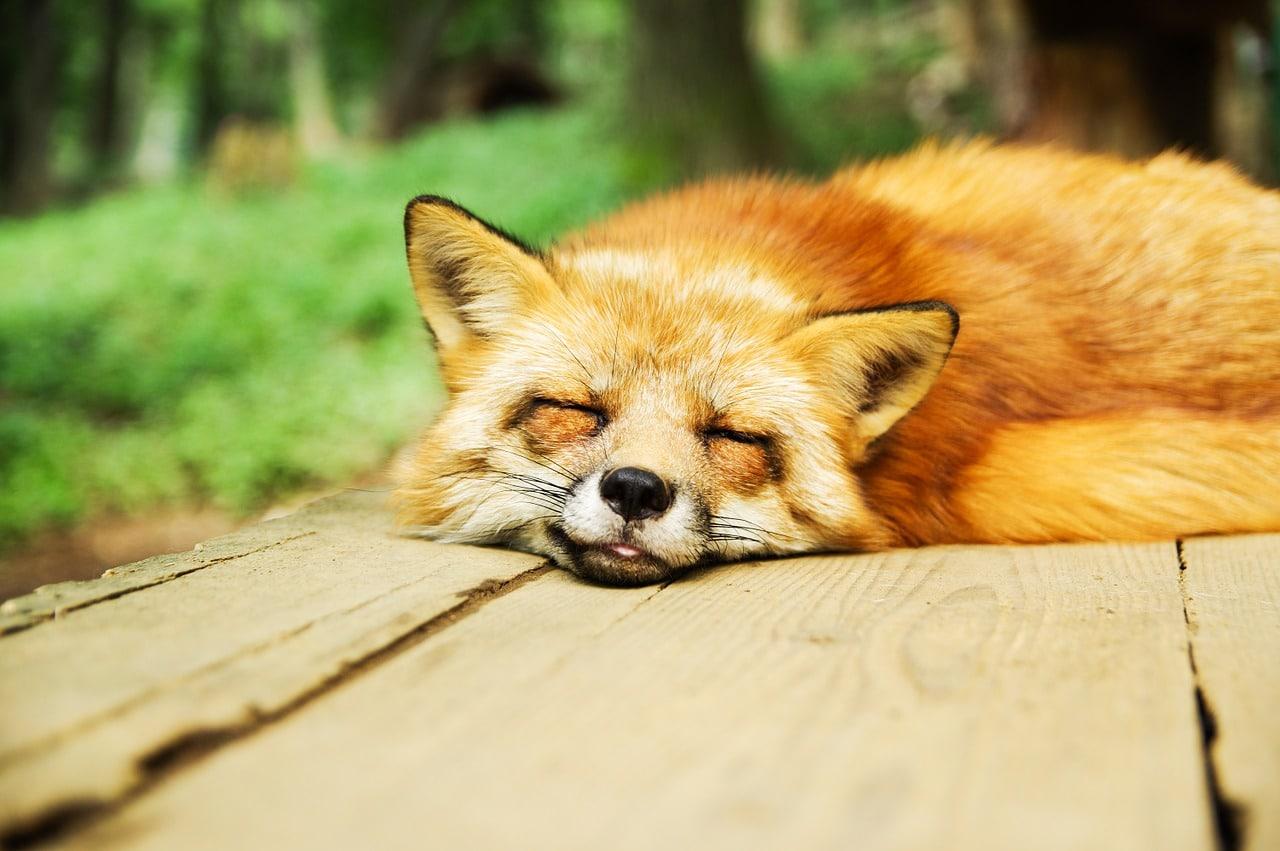 睡眠-靜下來