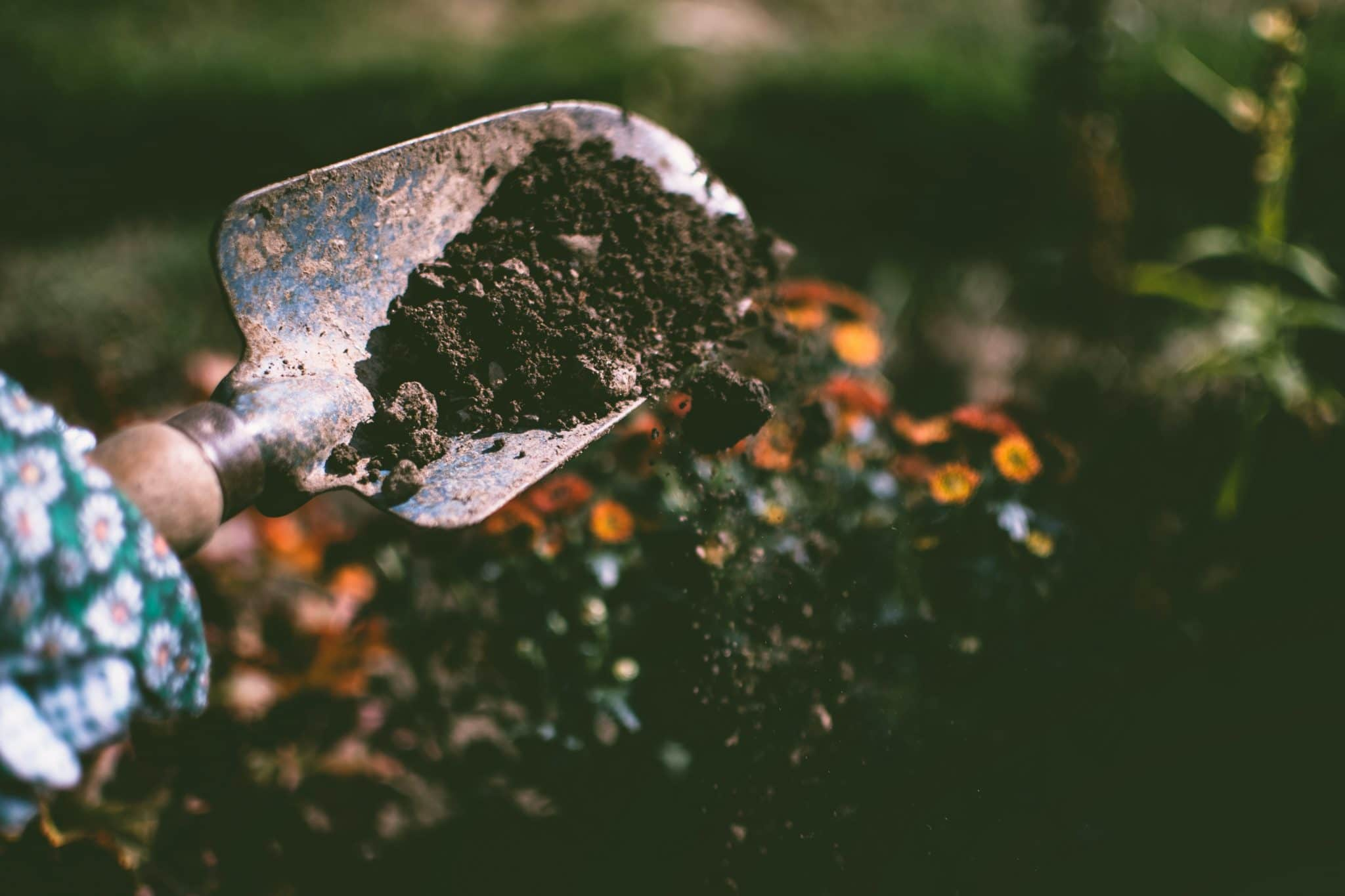園藝治療從生活中取材