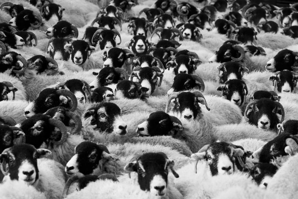 心理技法-羊群心理