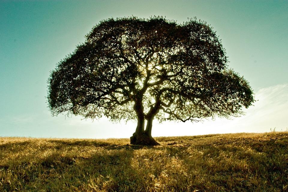 我們是心理學團體「澍洞」,不是「樹洞」 1